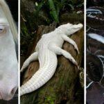 Animaux-albinos-22-photos-incroyables