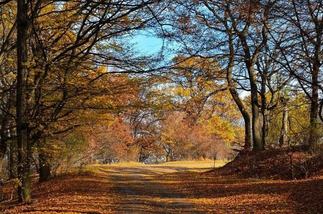 Forêt-de-Hoia-destinations