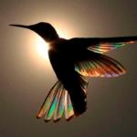 Le-colibri-9-photos-magiques-de-cet-oiseau