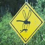 Pourquoi-les-moustiques-piquent-ils-plus-une-personne-qu-une-autre