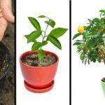 arbres-fruitiers-quon-peut-cultiver-a-partir-de-noyaux