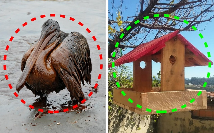 changement-climatique-faune-flroe