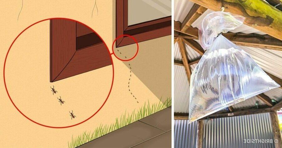 les-insectes-voici-comment-sen-debarrasser