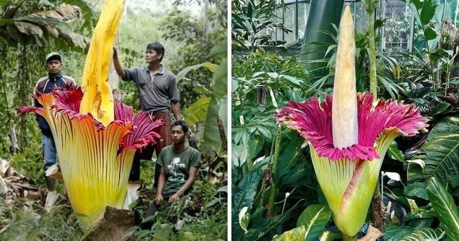 plantes-insolites-qui-ont-des-super-pouvoirs