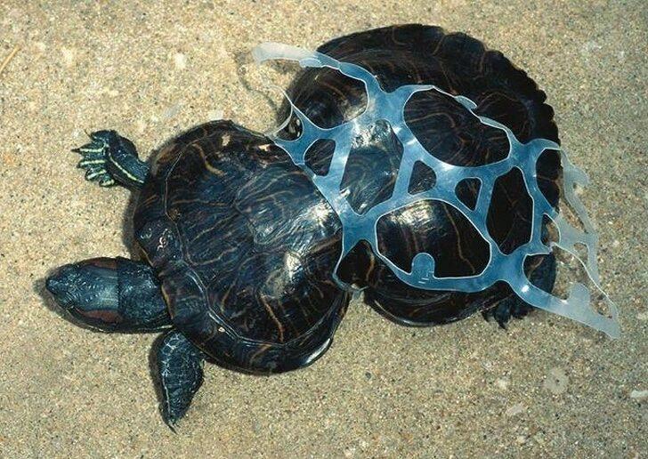 pollution-marine