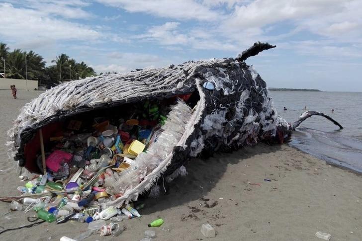 baleine-échoué-plastique-dérèglement-climatique
