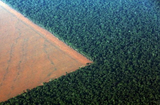 forêts-tropicales-Brésil