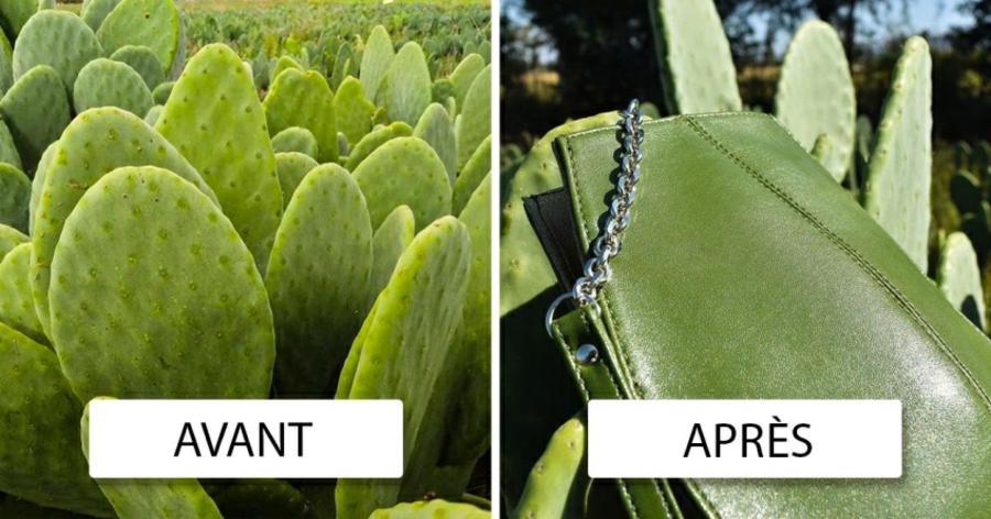 Cuir-vegan-2-hommes-créent-du-cuir-à-base-de-cactus
