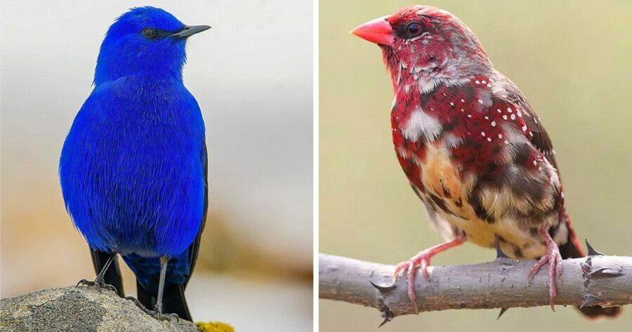 Oiseaux-rares-15-photos-qui-vont-vous-émerveiller