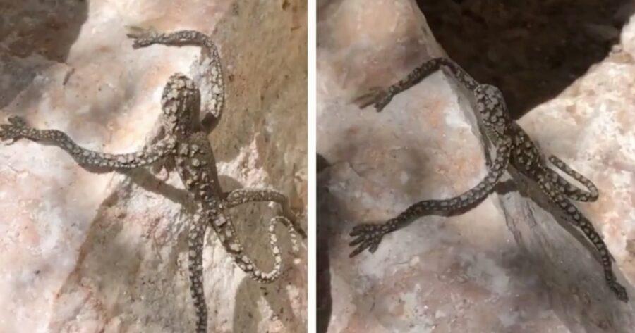 Tik-Tok-elle-poste-une-vidéo-montrant-une-étrange-créature