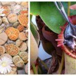 Plantes-bizarres-7-espèces-les-plus-étranges-du-monde
