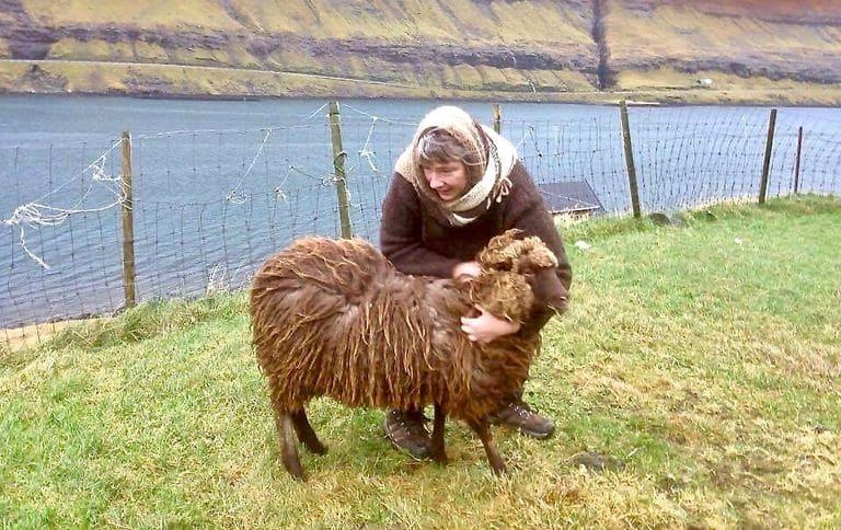 mouton-féroé