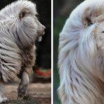 Lion-blanc-Tout-ce-qu-il-faut-savoir-sur-cet-animal